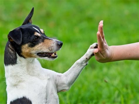 tricks to teach your puppy three tricks to teach your