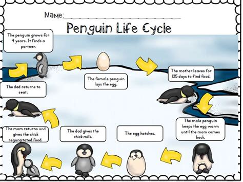 adelie penguin diagram penguin cycle printable autos post