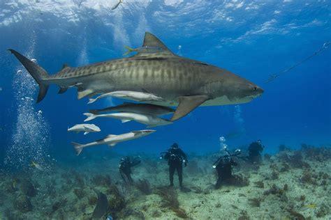 fatal shark attacks  rare      stay safe
