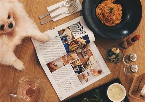 best pet friendly hotels 5 best pet friendly hotels and restaurants in singapore