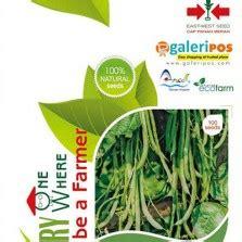 Dijamin Sawi Shinta Panah Merah cara membuat nutrisi hidroponik sendiri bibitbunga
