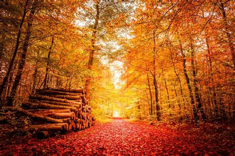 Home Design Decoration by Beautiful Autumn Landscape In Warm Colors Stock Photo