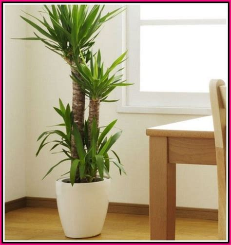 garden similar   pro    simple tips