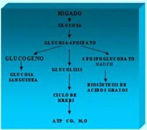 Tip Ex Joyko Ct 534 metabolismo celular biolog 237 a general