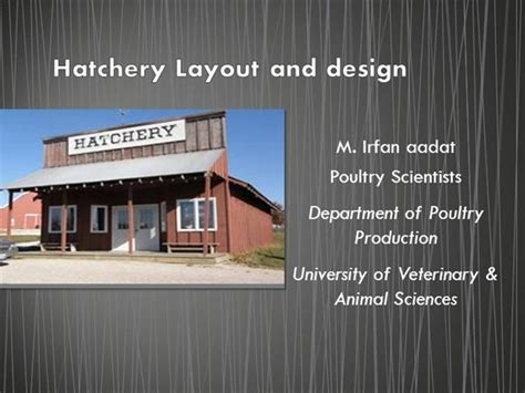poultry hatchery layout design hatchery layout and design 2 authorstream