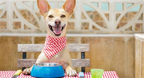 bone broth recipe for dogs 6 benefits of bone broth for dogs recipe proud