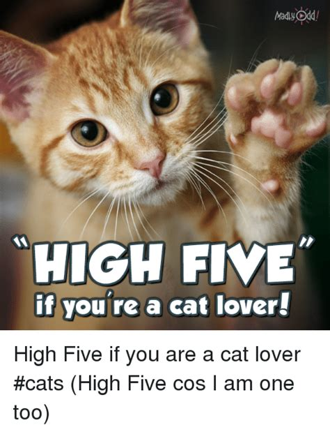 Cat Lover Meme - high five if you re a cat lover high five if you are a