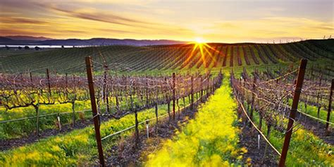 florida wine country guide to northern wineries books top 5 wineries to visit in napa valley california usa