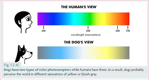 can see color can dogs see color