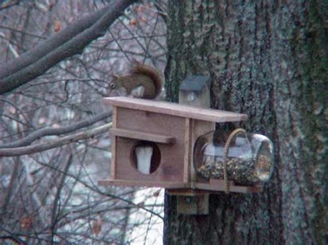 flying squirrel house plans 4 squirrel house designs