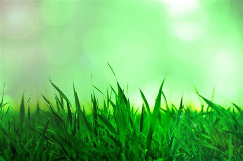 grass  stock photo public domain pictures