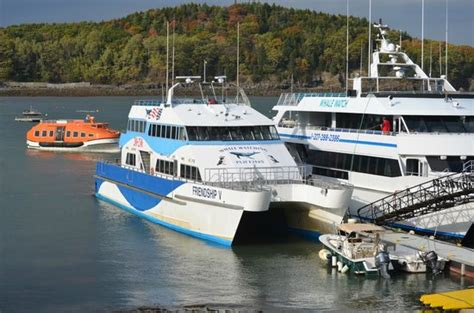 boat tour bar harbor tour boat picture of bar harbor whalewatch co