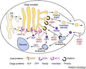 protein transport vesicular transport proteins