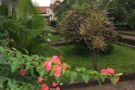 rental tanaman hias bogor i green house disain taman sekolah cantik