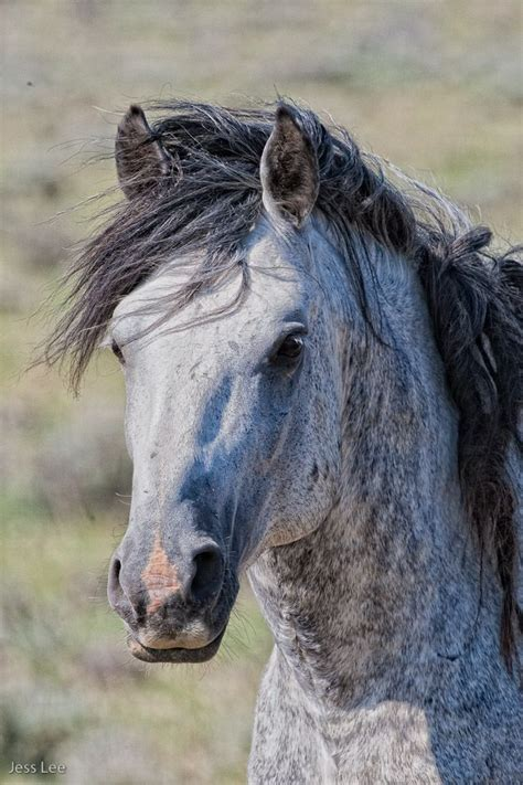 pictures mustang horse with smoke 1000 images about equus spangled on pinterest