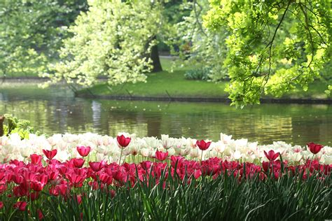 gardening picture keukenhof gardens picture by awinibhat for beautiful