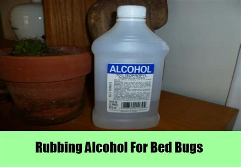 alcohol and bed bugs bed bug remedies alcohol