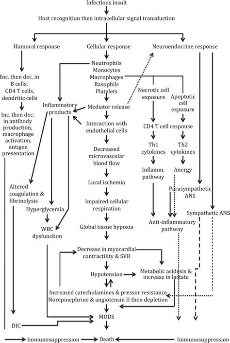 septic shock pathophysiology flowchart sepsis severe sepsis and septic shock oncohema key