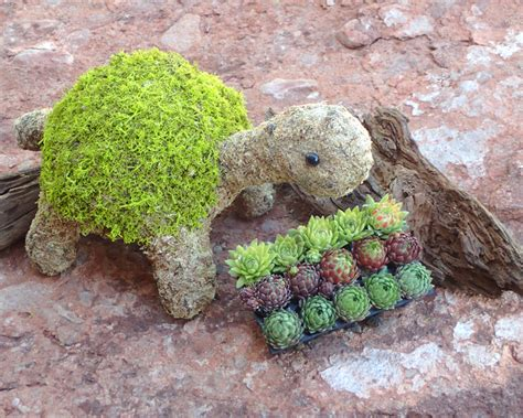 turtle topiary kit simply succulents
