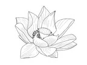 Lotus Outline Images Image Gallery Lotus Flower Outline