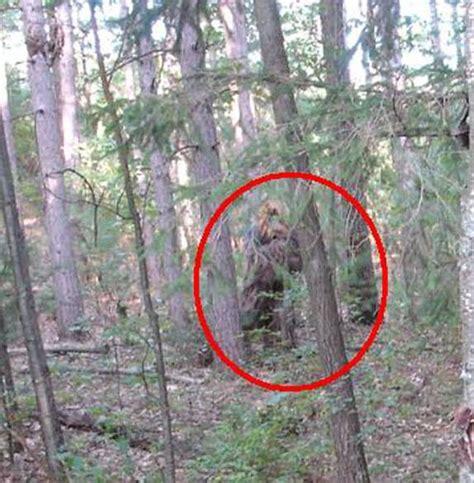 Bigfoot Search Is Bigfoot Real Bigfoot Sightings