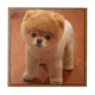 pomeranian gift ideas pomeranian gifts on zazzle