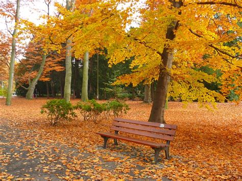 autumn park bench garden autumn park bench tree leaf photo free download