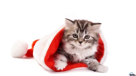 Images Of Christmas Cats | christmas cat wallpapers wallpaper cave
