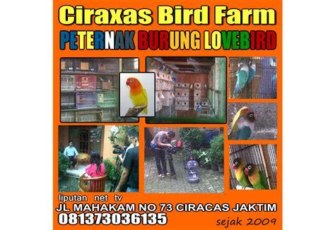 Tempat Pakan Burung Lb lovebird breeder