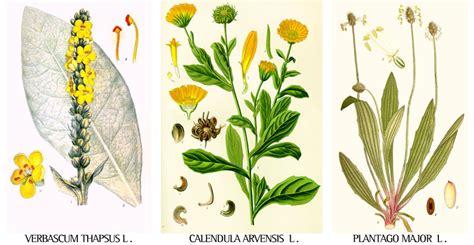 fiori medicinali 郛郛郛 ventura erbe 郛郛郛 erboristeria in san vittorino 00132