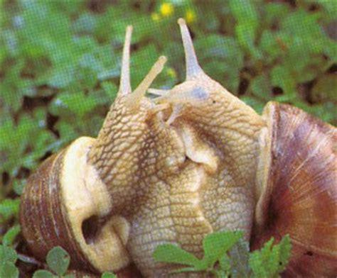 alimentazione lumache di terra come allevare lumache fare di una mosca