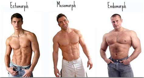healthy fats for endomorph what is endomorph type way to