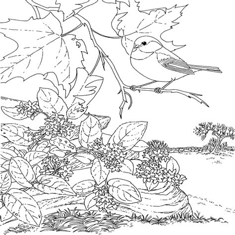 printable coloring pages of birds and flowers florida state bird mockingbird florida state bird
