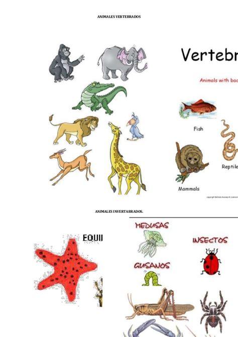 imagenes animales invertebrados animales vertebrados e invertebrados