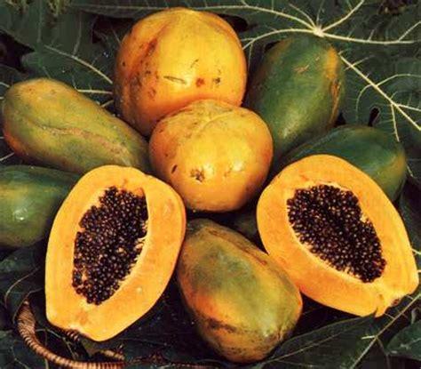 fruit d afrique fruit d afrique au clair de la plume