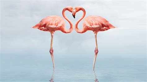 wallpaper flamingos flamingo full hd wallpapers 1080p wallpapers13 com