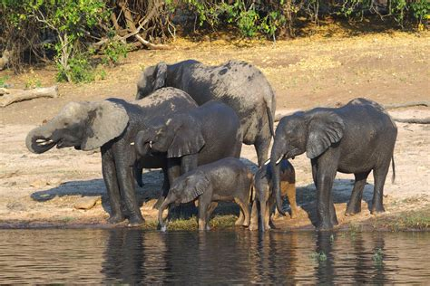 Water For Elephants Air Untuk Gajah By Gruen gambar petualangan margasatwa binatang menyusui fauna
