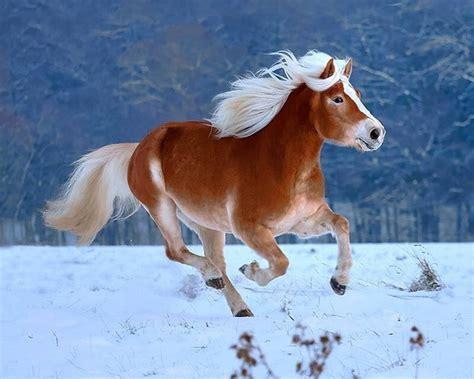 nice hourse nice horse horses pinterest