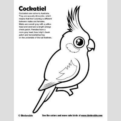 cockatiel coloring page