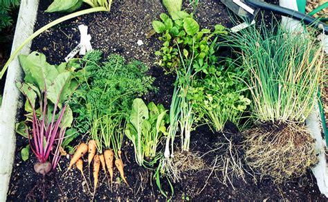 Harvesting For Success 6 Key Steps Change Create Transform Fall Garden Vegetables In