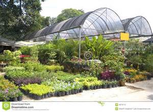 tropical plant nursery stock photography image 4074172