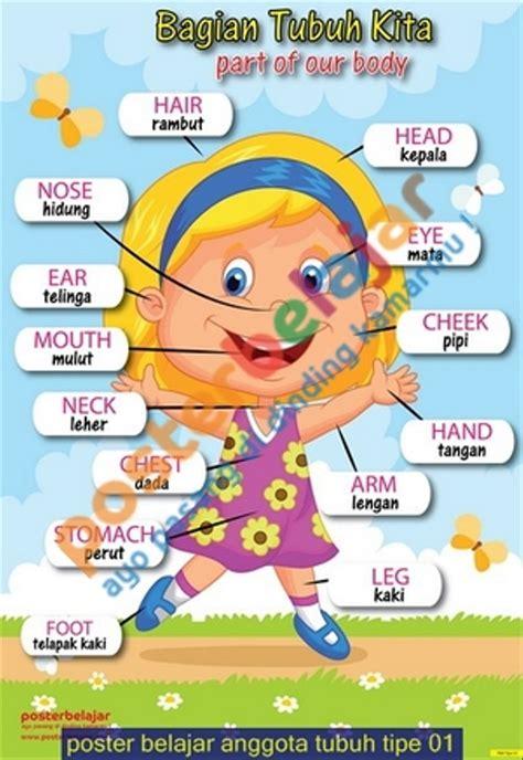 jual poster belajar anggota tubuh tipe   lapak