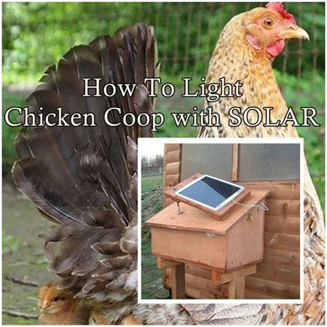 solar powered chicken coop light solar solar l post and hen house on