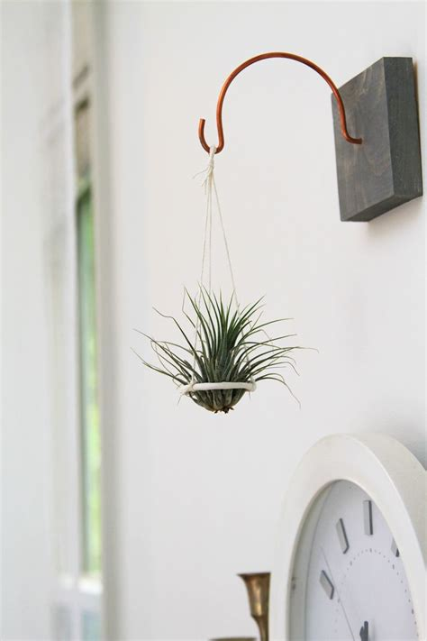 air plant wall holder 25 best ideas about hanging air plants on pinterest