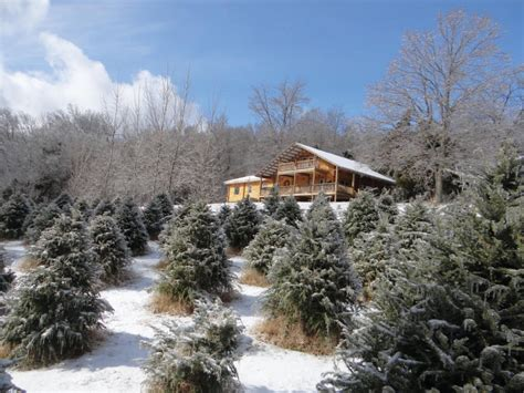 pick wildwood christmas tree farm