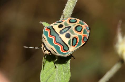 colorful bugs 10 most beautiful and colorful insects in nature wow amazing