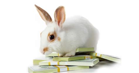 like a bunny book review and giveaway wealthing like rabbits my