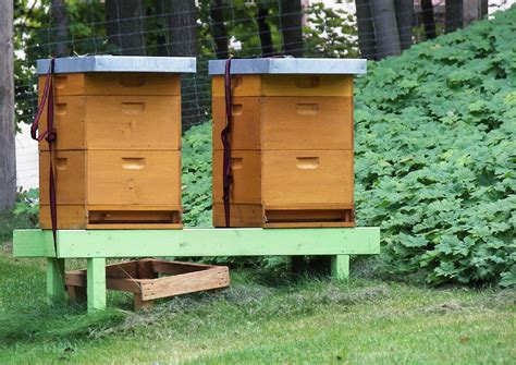 hobby garten bienenkisten ideale bienenstock im garten hobby und