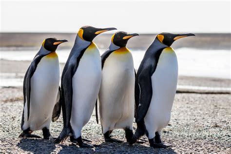 google images penguins google penguin 4 0 is on the horizon will it impact your