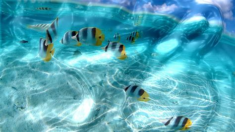 download liquid of life animated wallpaper desktopanimated com free download watery desktop 3d screensaver screen saver